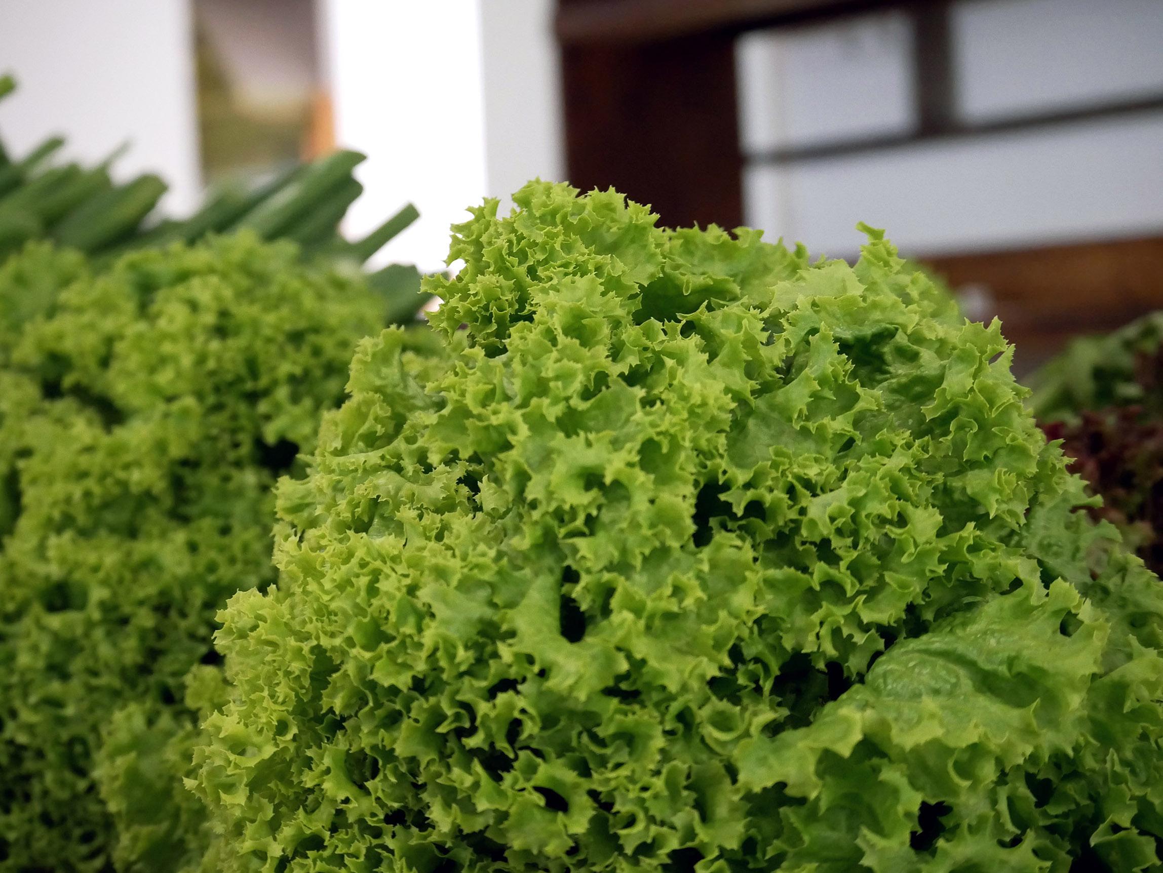 BioRózsa: lollo saláta az Újpesti Biopiacon